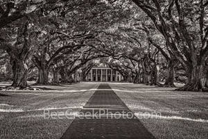 Lousiana, Oak Alley Plantation, black and white, BW, big house, branches, mansion, oak trees, plantation, roots, sidewalk, slaves, sugar cane, canopied path, seven oaks, oak valley, National Historic
