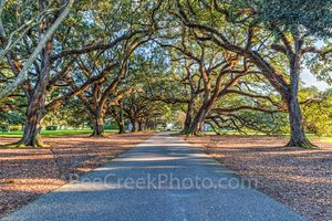 Lousiana, Oak Alley Plantation, sunrise, big house, branches, mansion, oak trees, plantation, roots, sidewalk, slaves, sugar cane, canopied path, seven oaks, oak valley, National Historic landmark, sl