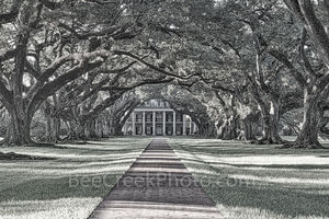 Oak Alley Plantation, mansion, black and white, bw, historic, landmark, southern, deep south. southern plantation, oak valley, seven oaks, slave, sugar cane, fields, tour, slavery, usa,