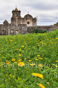 Presidio La Bahi, Presidio Goliad, wildflowers, indian paintbrush, daisy, historic, catholic church, mission, missions, spanish, fort, vertical, tall, texas revolution, battle of Goliad, yellow daisy