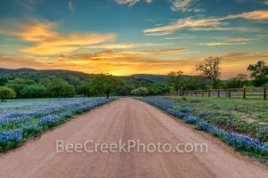 bluebonnets, Texas bluebonnets, texas hill country, texas wildflowers, sunset, dirt road, texas, scenery, texas landscape, hill country, hill country landscape, spring, bluebonnet road, wildflowers,