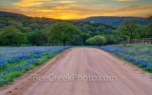 bluebonnets, texas hill country, sunset, dirt road, texas, scenery, texas landscape, hill country, texas bluebonnet, hill country landscape, spring, bluebonnet road, wildflowers, texas wildflowers, im