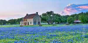 Bluebonnet, bluebonnets, blue bonnets, bluebonnet house, Marble Falls,  farm house, storm cloud, sunset, stone farm house, farm equipment, landscape, indian paint brush, red, wildflowers,