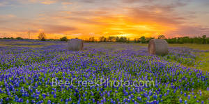 Texas Bluebonnets, bluebonnets, sunset, hay bales, sunrays, sun rays, red, popped, colorful, flowers, wildflowers, indian paintbrush, Sunset Over Texas Bluebonnets, Sunset Over Texas Bluebonnets Wild,