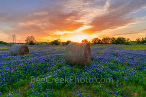 Texas bluebonnet, sunset, hay bales, sunset colored sky, sun rays, rural, wildflowers,