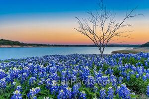 Texas Bluebonnets Twilight at the Lake