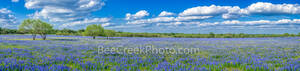 bluebonnets, mesquite trees,  pano, panorama, ranch, poppies, texas wildflowers, San Antonio, southern Texas, green, blue, field, south texas, texas wildflowers,