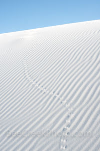 White sands, new mexico, nm, tracks, sand patterns, gypsum, dunes, patterns in the sand, vertical, dune, animal.