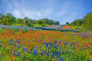 bluebonnets, indian paintbrush, blue, reds, landscape, landscapes,  wildflowers, roadside, Texas Hill Country, Texas flowers, Texas wildflowers, photos of wildflowers, colorful, spring flowers, spring