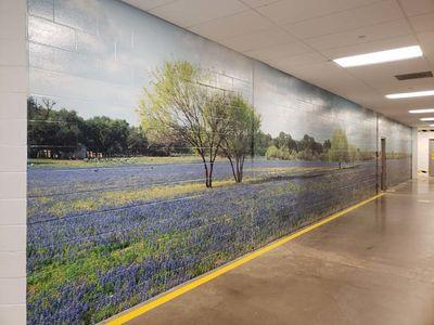 Texas Bluebonnet field Wall Mural