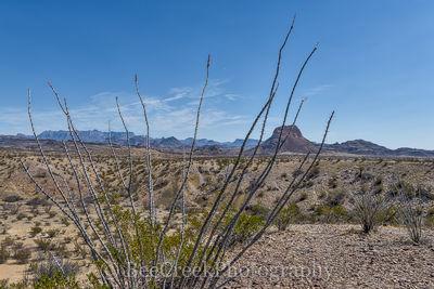 Big Bend National Park, Octillos, desert, distant views, landscape