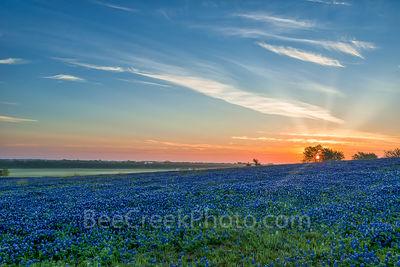 Bluebonnet Images - Bluebonnet Sunrise Mist