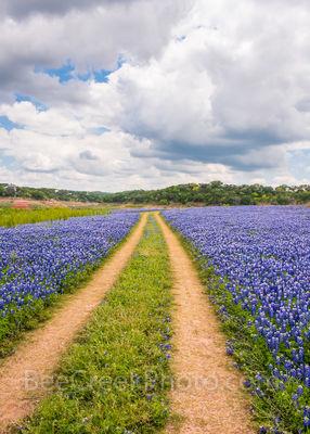 Bluebonnet Road 2