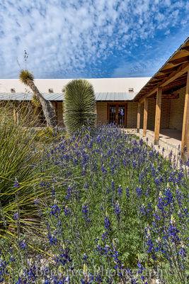 Bluebonnets at Visitors Center