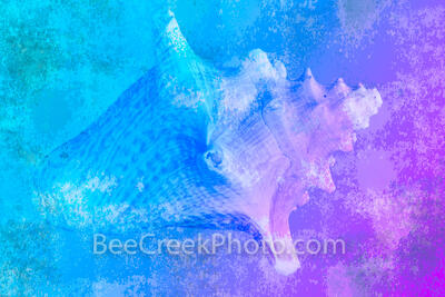 Conch Shell Abstract