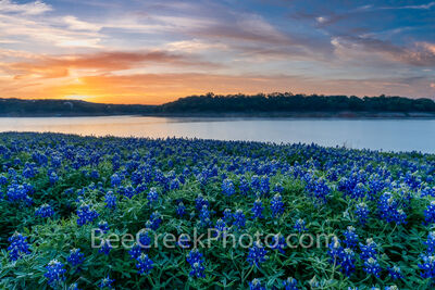 Dawn Over Lake Bluebonnets