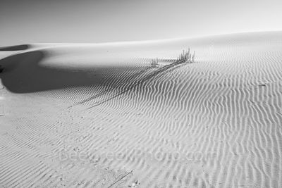 Shadows Across Dunes
