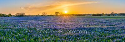 Sunset over Bluebonnet Landscape Pano