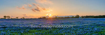 Texas Hill Country Bluebonnets Field Pano
