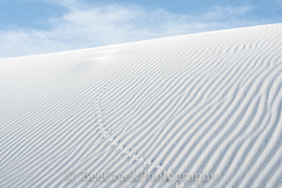 Tracks in the Sands