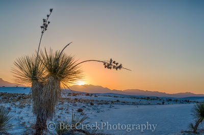 Yucca Sunset in Whte Sands NM