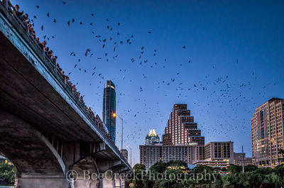 Austin, cityscape, urban, Bats, Mexican Free Tail bats, Frost, Austonian, city, downtow, austin skylines, austin cityscapes