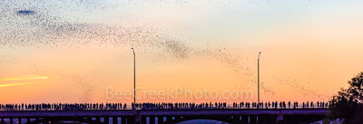 Austin Congress Bats Panorama, Austin, Congress, Bats, baby bats, mexican free tail bats, bridge, downtown, Ann Richard Congress Bridge, dusk, people, crowds, , sky, Line, Radisom, hotels, Hyatt, pano