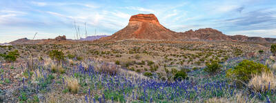 Bluebonnets, blue bonnets, images of bluebonnet, texas wildflowers, texas bluebonnets, Big Bend National Park, Big Bend, landmark, Cerro Castellan, desert, landscape, bloom, Chiso bluebonnets, big ben