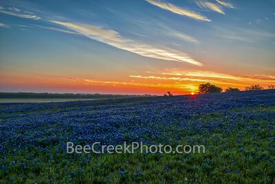 Blue Bonnet Sunrise