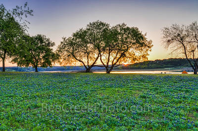 Bluebonnets, image of blueblonnets, pictures of bluebonnets, springtime, sunrise, Texas hill country, sun rays, field of bluebonnets, wildflower, water, river, tents, travel,lifestyle, Lady Bird, High