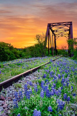 Bluebonnet and Railroad Tracks Sunrise Vertical