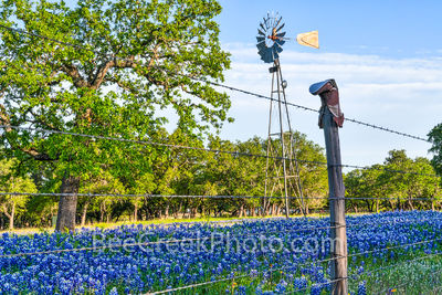 Bluebonnet, Boot Fence, and Windmill