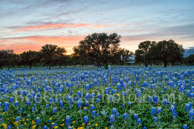 bluebonnets, wildflowers, texas hill country, sunset, dusk, colorful sky, landscape, rural, field of bluebonnets, images of texas, texas landscapes, Texas bluebonnets, texas wildflowers