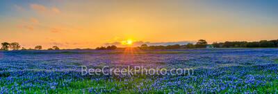 Bluebonnet Golden Sunset Pano
