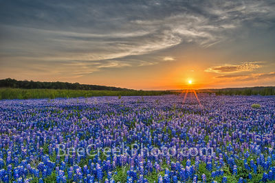 Bluebonnet Landscape at Sunset
