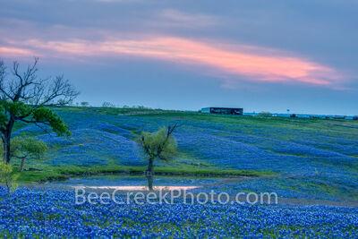 Bluebonnet Ranch Landscape Sunset