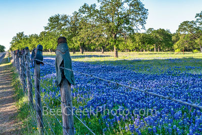 texas fence, boots, cowboy boots, bluebonnets, texas bluebonnets, texas wildflowers, blue bonnets, texas scenery, texas landscape, windmills in texas, texas wildflower landscape, texas hill country, h