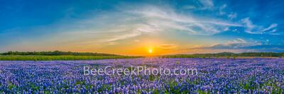 Bluebonnets Sunset Landscape Pano