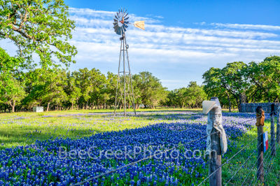 Boots, Bluebonnets, and a Windmill