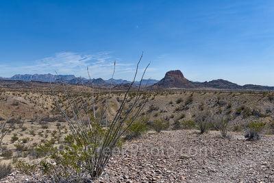 Octillos, Big Bend National Park, Cerro Castellian, Chisos mountains, distant views, desert, landscape,