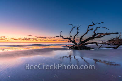 jekyll island, driftwood beach, boneyard beach, sunrise, colorful, sand, alantic ocean, reflections, reflecting, colors, sky, geogia, golden isles, east coast, driftwood, skeleton tree, tree graveyard