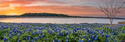 Dawn Over Lake Bluebonnets Pano