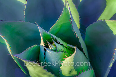 Desert Agave Art