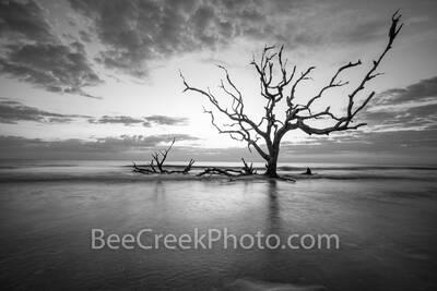 Driftwood Beach Long Exposure BW