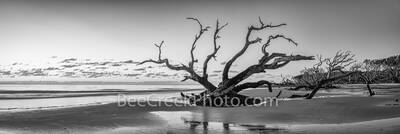 jekyll island, driftwood beach, boneyard beach, beach, sunrise, black and white, b w, alantic ocean, pano, panorama, deadwood, east coast, reflections, sky, Geogia, wet sand, Golden Isles,
