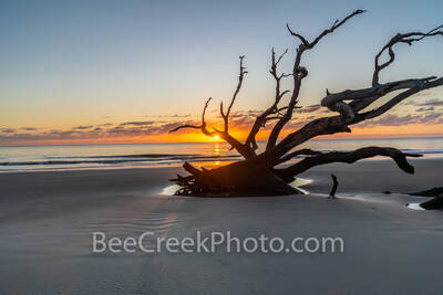 Driftwood Tree Sunrise