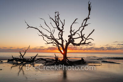 driftwood beach, tree, jekyll island, georgia, boneyard beach, stumps, coast, alantic, ocean, coastline, beach, sunrise, rays, Golden Isles,