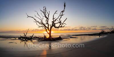 Driftwood Tree Sunrise Pano