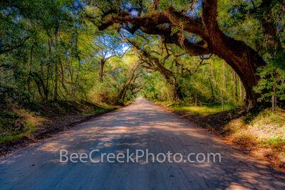 Edisto Island Dirt Road Charleston SC