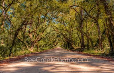 Edisto Island Tree Tunnel Charleston SC